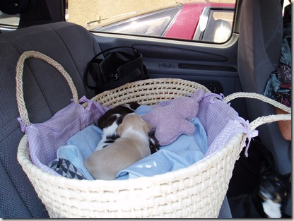 Mother's Day - 24 Days Old First Ride In A Car