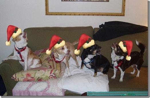 gang-singing-for-santa-on-roof-2011_thumb_thumb[1]