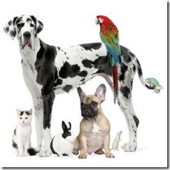 pet-friendly-home