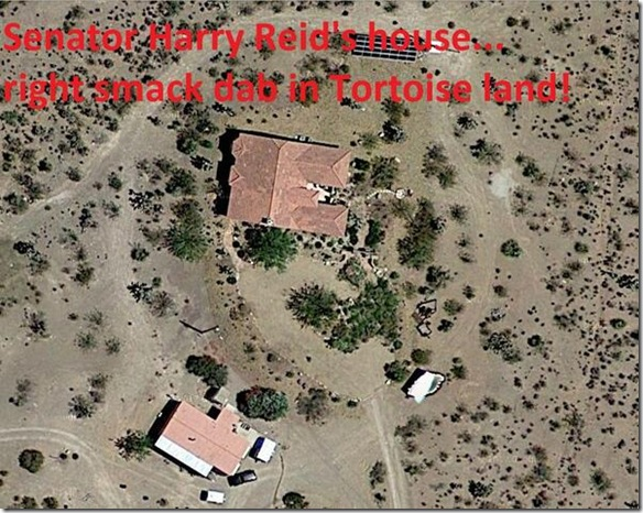 Harry's House Unsurrounded in Tortoise Land